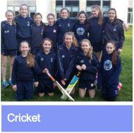 Cricket link