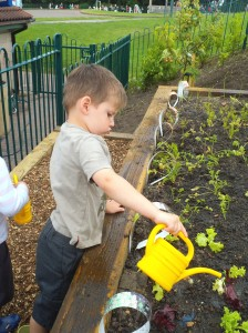 Our new terraced allotment2