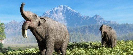 Weird Extinct Animals 11